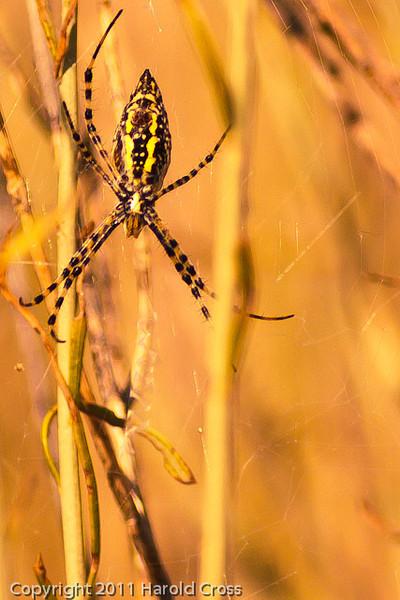 A spider taken Sep. 8, 2011 near Fruita, CO.