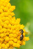A bee taken Aug. 6, 2011 in Fruita, CO.