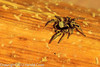 A spider taken Apr. 7, 2012 in Fruita, CO.
