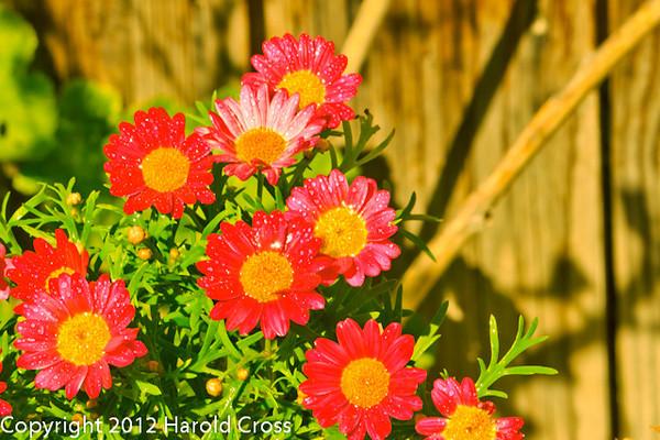 Flowers taken May 14, 2012 in Fruita, CO.