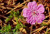 A Flower taken May 7, 2012 in Fruita, CO.