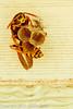 A Wasp taken Mar. 31, 2012 in Fruita, CO.