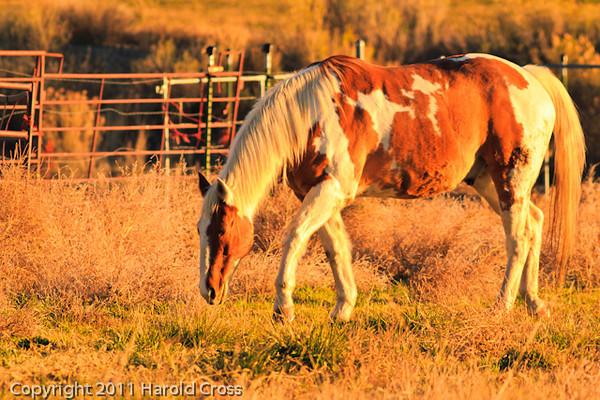 A horse taken Nov. 29, 2011 near Fruita, CO.