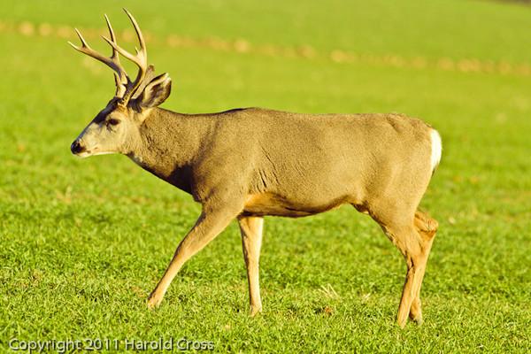 A deer taken Nov. 8, 2011 near Fruita, CO.