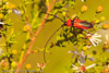 An insect taken Sep. 7, 2011 near Fruita, CO.