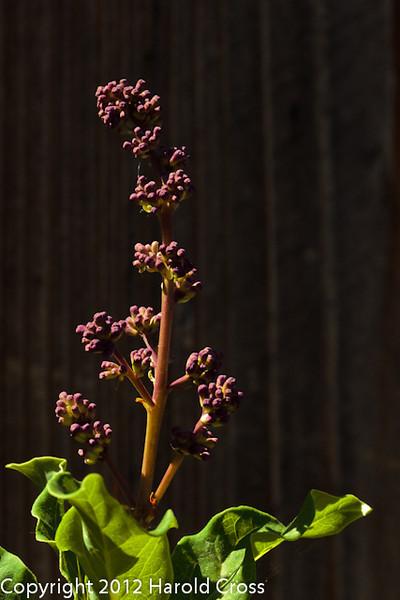 A Lilac flower taken May 14, 2012 in Fruita, CO.