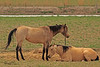 Horses taken April 13, 2011 near Fruita, CO.