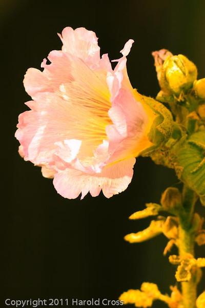 A flower taken Aug. 21, 2011 in Fruita, CO.