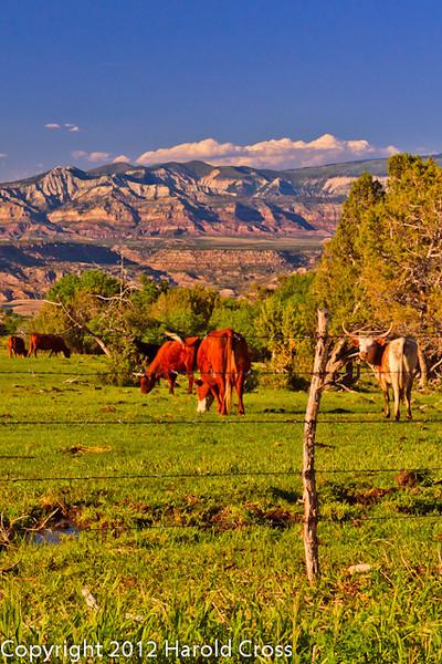 A landscape taken May 22, 2012 near Mesa, CO.