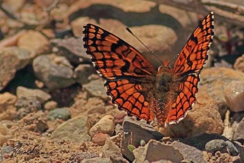 A butterfly taken April 22, 2011 near Fruita, CO.
