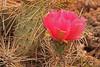A cactus flower taken Jun 11, 2010 near Fruita, CO.