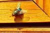 A fly taken Apr. 7, 2012 in Fruita, CO.