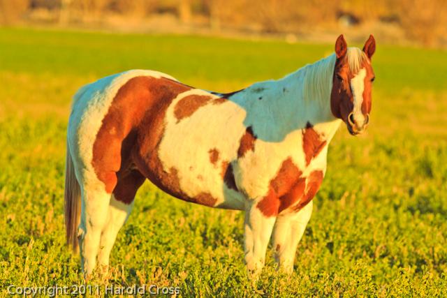 A horse taken Nov. 8, 2011 near Fruita, CO.