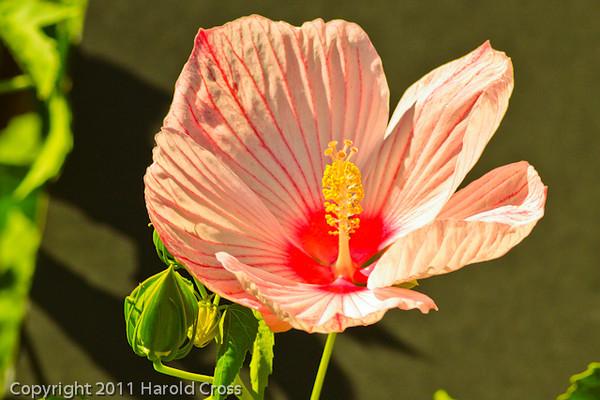 A flower taken Sep. 13, 2011 in Fruita, CO.
