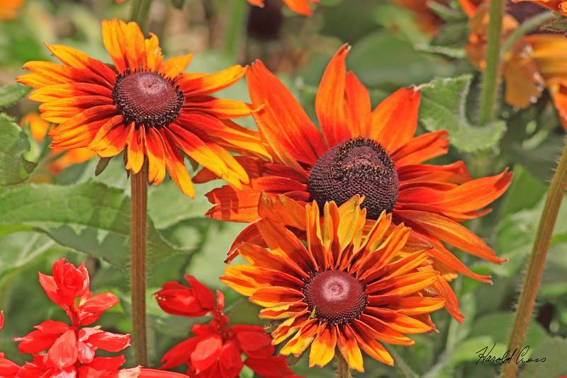 A flower taken Aug 11, 2010 near Denver, CO.