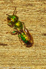 An insect taken May 12, 2012 in Fruita, CO.