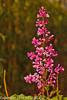 A Lilac taken May 19, 2012 in Fruita, CO.