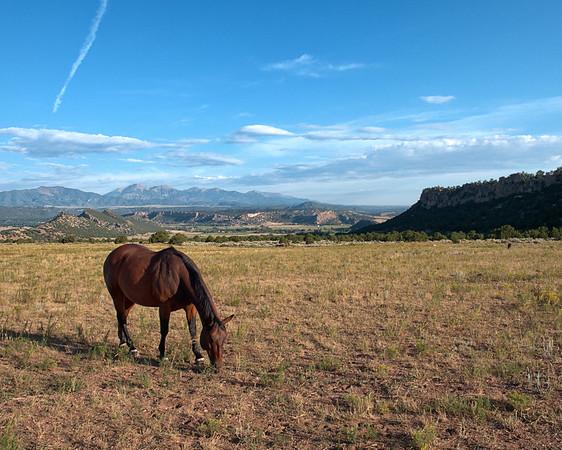Colorado Mary Ann's Ranch  8.16.2016