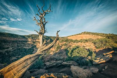Utah Juniper & Sky