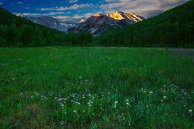 Colorado, Aspen, Castle Creek, Wild Flowers, Sunrisr