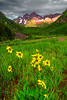 Colorado, Aspen, Maroon Lake, Willld Flowers