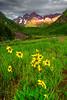 Colorado, Aspen, Maroon Lake, Willld Flowers