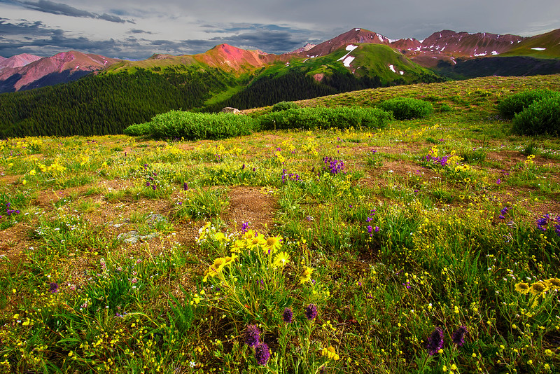 Colorado, Aspen, Independence Pass, Wild Flowers