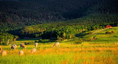 Colorado, Ridgway, Last dollar, Road , Mount Sneffels