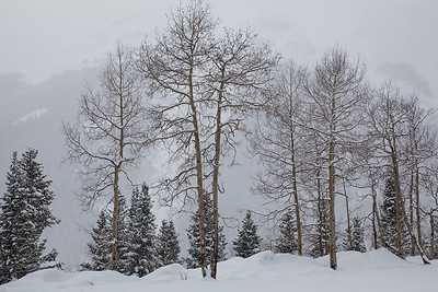 (SJ-11035)  Aspens on Red Mountain Pass