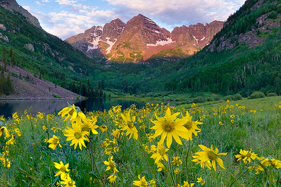 Maroon Bells and Yellow Arnica at Sunrise  (MB-16comp2)
