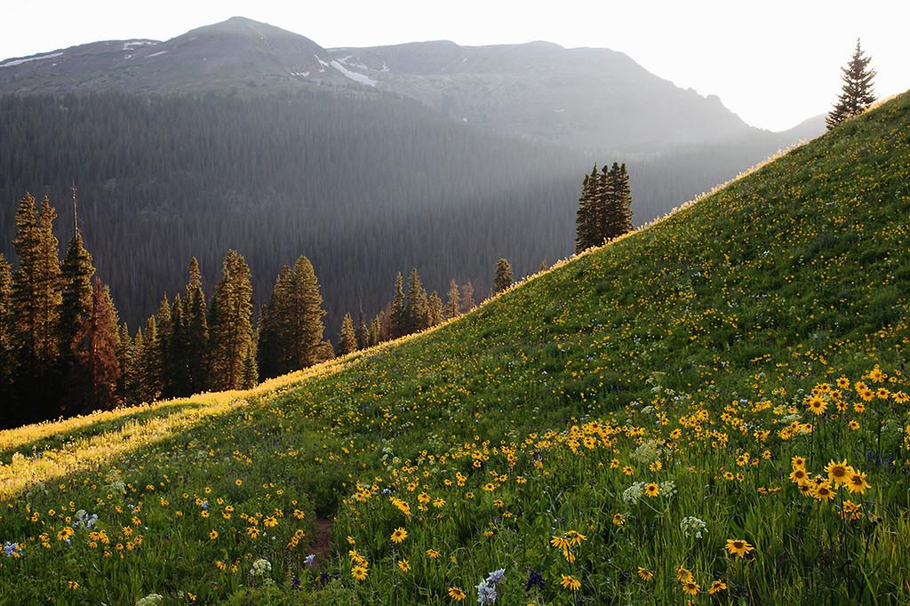 (WC-09012)  Wildflowers below West Maroon Pass - Maroon Bells-Snowmass Wilderness.