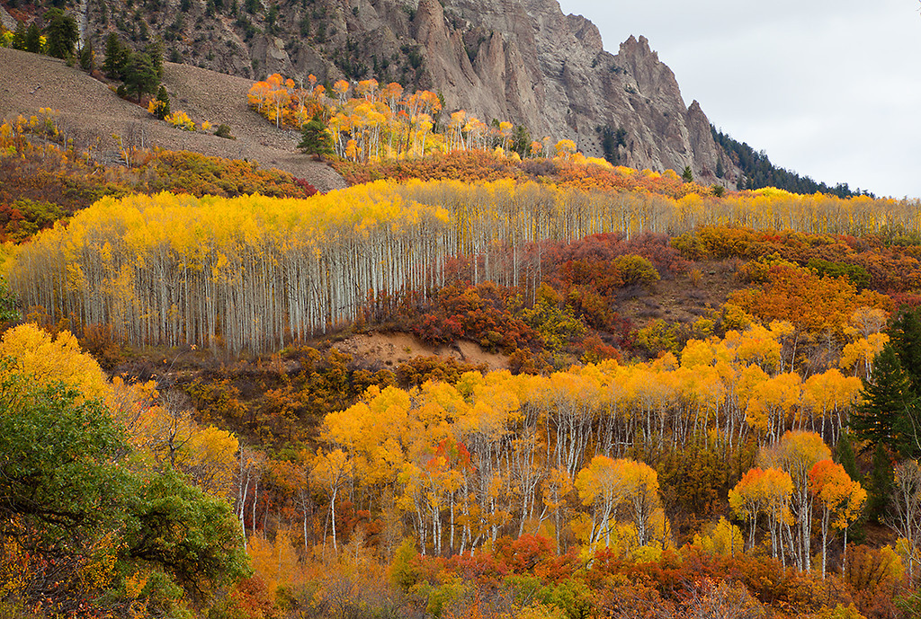 (WC-09095)  Autumn aspen and oak near Kebler Pass - West Elk Mountains.