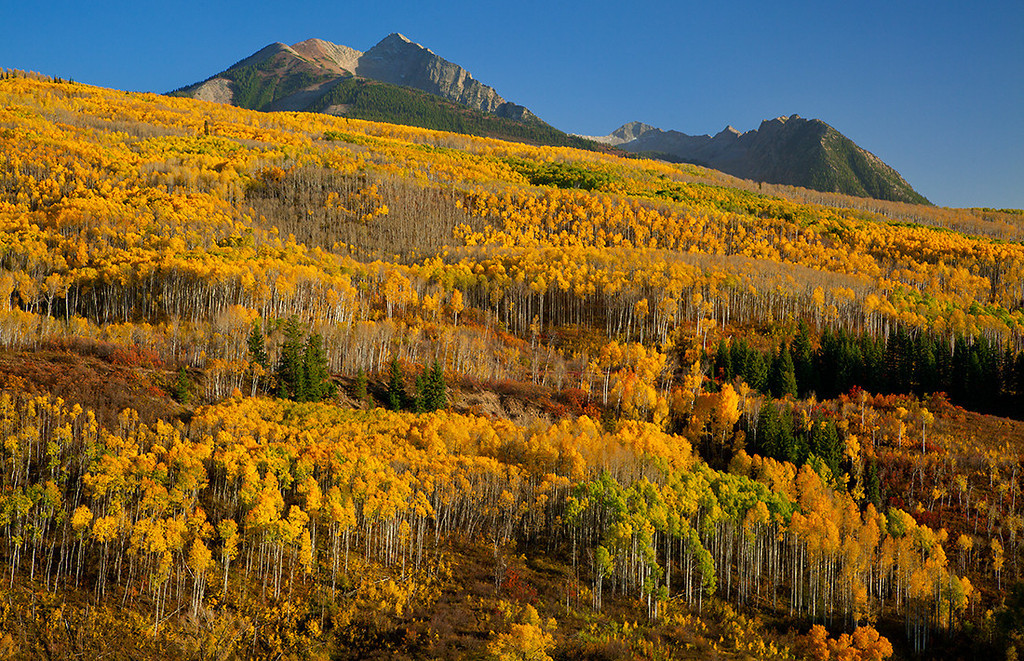(WC-09073)  Vast stands of autumn aspen beneath Chair Mountain - McClure Pass in Gunnison National Forest.
