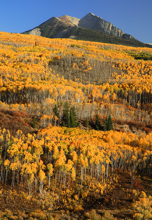 (WC-09074)  Autumn aspens and Chair Mountain - McClure Pass.