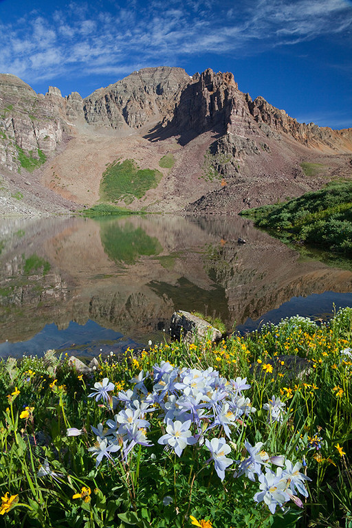 (MB-10058)  Blue Columbine beneath Cathedral Peak in the Elk Mountains.