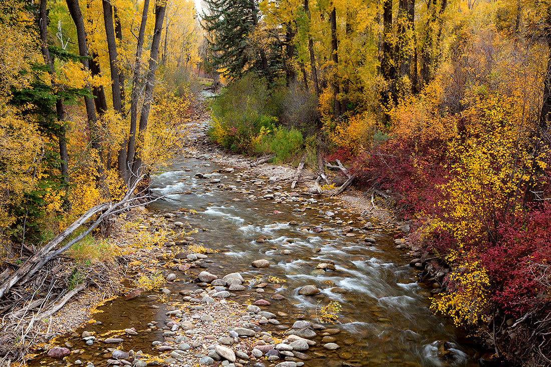 (WC-09060)  Autumn colors along Snowmass Creek near Aspen..