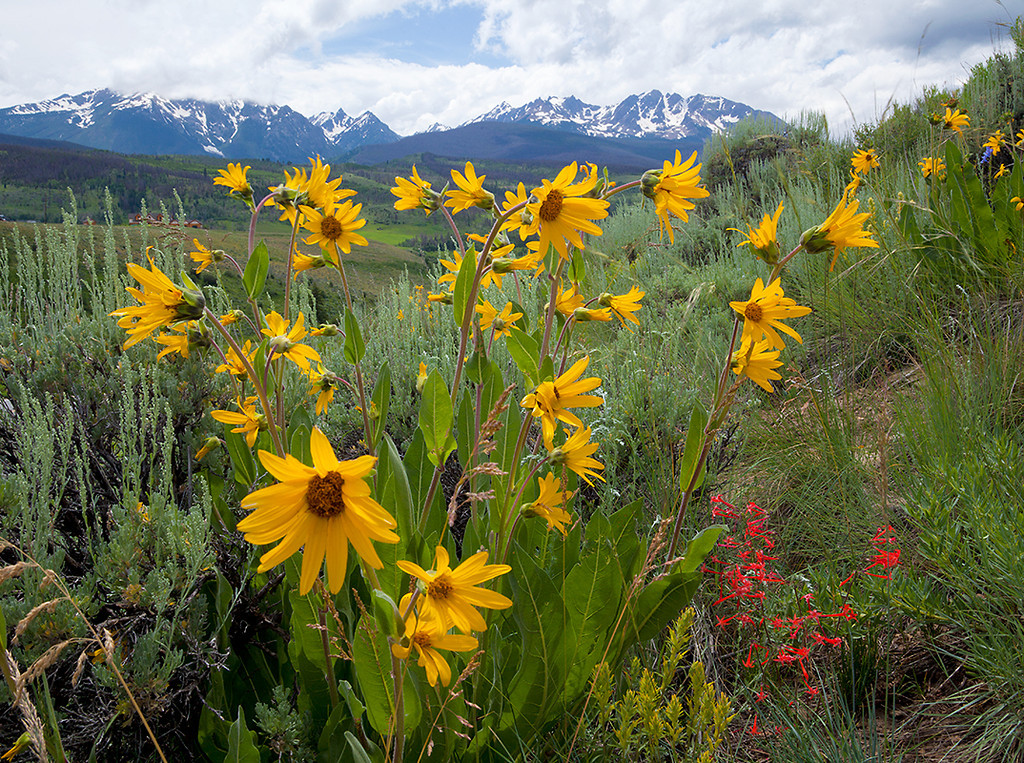 (NO-11020)  Mule's Ears and Gore Range
