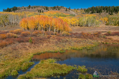 Gore Pass Aspens and Pond  (NO-19541)