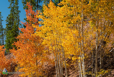 Aspen Colors on Gore Pass  (NO-19533)