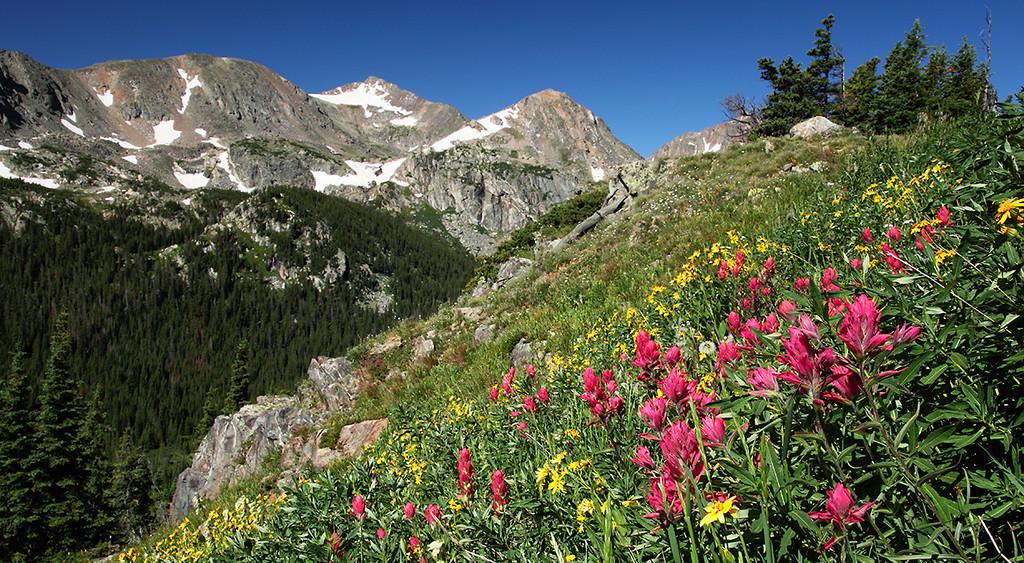 (NO-09059) Wildflowers on Arapaho Pass