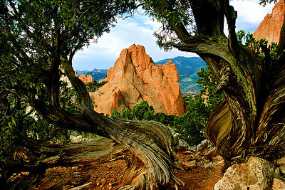 (A056)  South Gateway Rock framed by juniper - Garden of the Gods