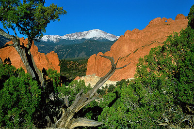 (PP-0403)  Garden of the Gods, Pikes Peak and Juniper - Springtime