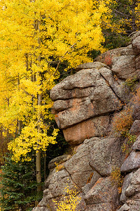 (PP-0869)  Aspen and Granite - Pike National Forest
