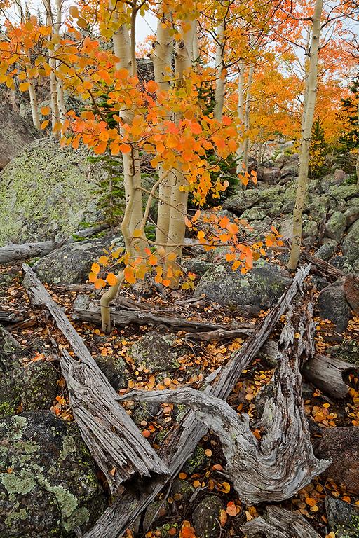 (RM-10039)  Deadwood and aspens above Bear Lake
