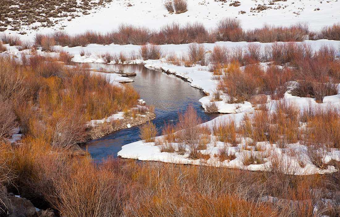 (SJ-11071)  Willows along Cedar Creek near Cerro Summit.
