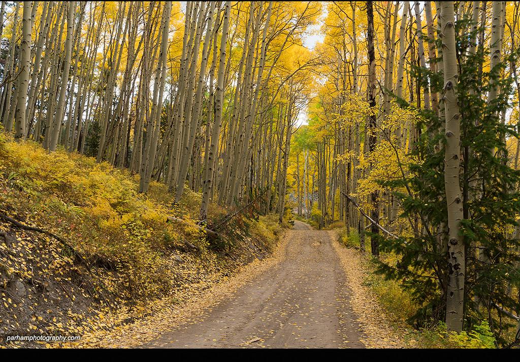 Colorado Country Road  (SJ-16759)