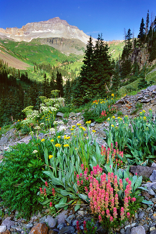 (YB-0605)  13,694' Gilpin Peak above wildflowers in Yankee Boy Basin.