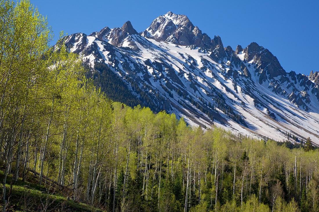 (SN-10043)  Springtime aspen forest beneath 14,150' Mount Sneffels.