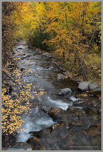 South Fork of Arkansas River - Autumn  (SA-18221)
