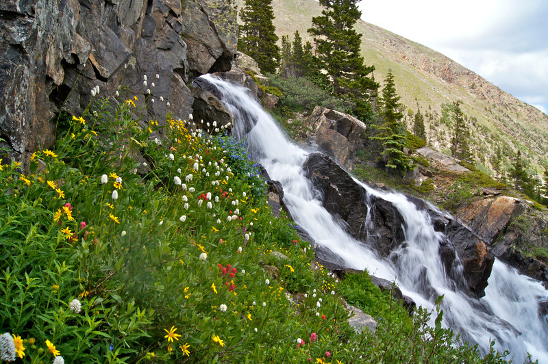 A colorful mix of wildflowers tucked away under a cliff wall alongside Continental Falls, near Breckenridge, CO.
